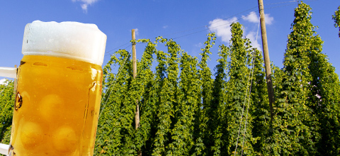 hopfen-bier-erlebnis-stadtfuehrung-mainburg-2016