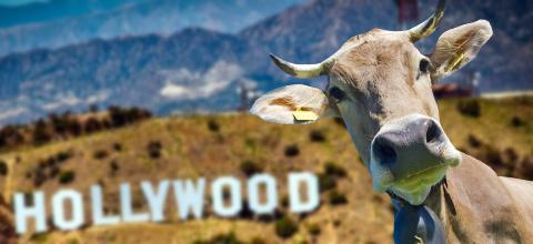 Hollywood auf'm Dorf