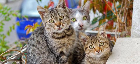 Katzenfreunde Mainburg suchen Verstärkung